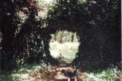 moon gate 2